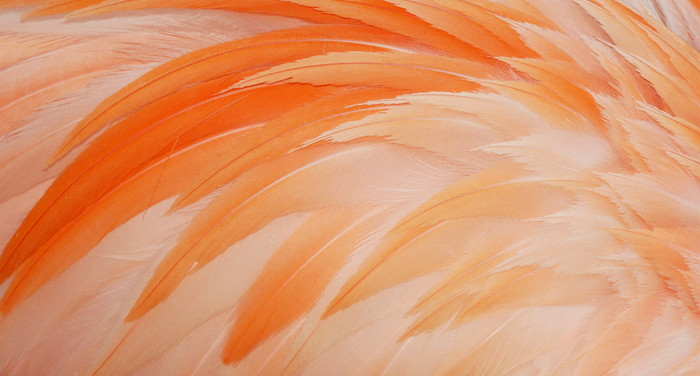 A feather (Nexus) for scaling Lean/Agile Product Development